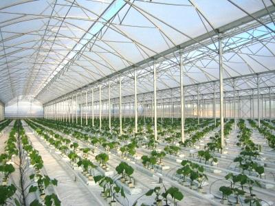 Проектная организация Томск разработает и реализует проект тепличного и растениеводческого комплекса. Проекты парников и теплиц для сельского хозяйства.